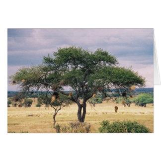 Afrikanischer Wurst-Baum Karte