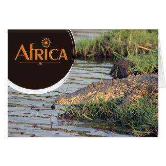 Afrikanisches Krokodil notecard Karte
