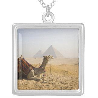 Ägypten, Kairo. Ein einziges Kamel starrt über an Versilberte Kette