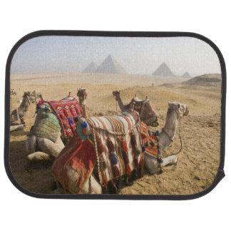 Ägypten, Kairo. Stillstehendes Kamelanstarren über Autofußmatte