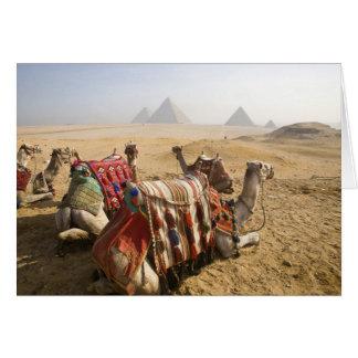 Ägypten, Kairo. Stillstehendes Kamelanstarren über Karte