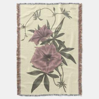 Ägyptische Winden-botanische Illustration Decke