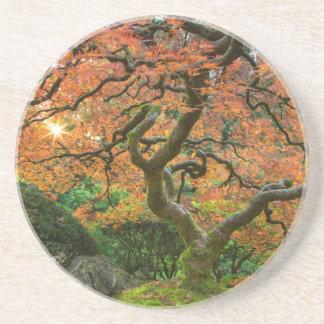 Ahornbaum an den Japaner-Gärten im Herbst Untersetzer