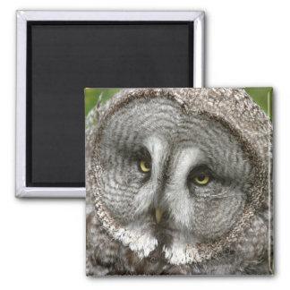 Aimant de hibou de grand gris