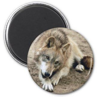 Aimant de loup de loups