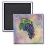Aimant de raisins de cuve de pinot noir