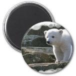 Aimant d'ours blanc de bébé