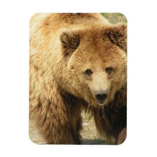 Aimant d'ours gris magnets en rectangle