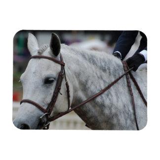 Aimant flexible de cheval gris d'Appaloosa Magnets Rectangulaires