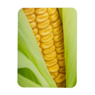 Aimant frais de maïs magnets