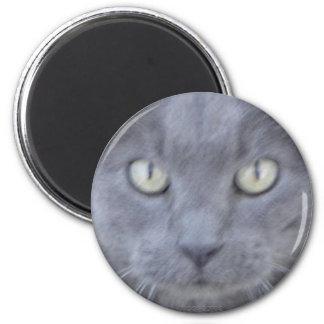 Aimant gris de visage de chat