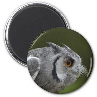 Aimant - hibou de gris de bébé