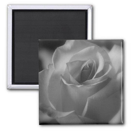 Aimant noir et blanc de rose