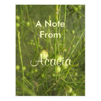 Akazie Postkarte