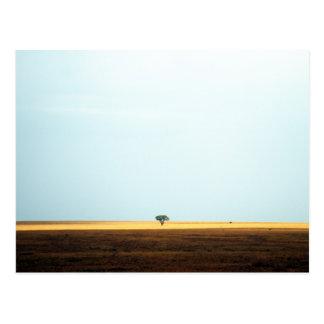 Akazien-Baum im Horizont. Afrika. Postkarte
