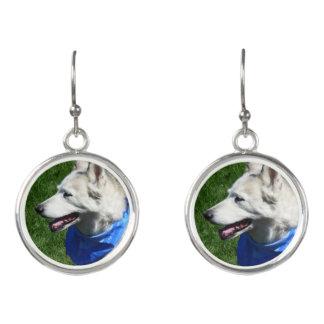 Alaska-Schlittenhund-Ohrringe Ohrringe