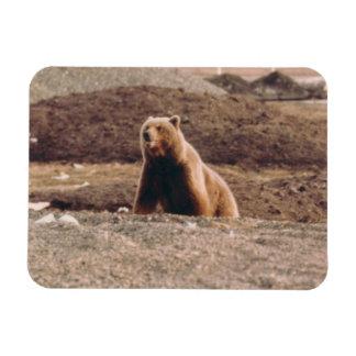 Alaska-Tundragrizzly-Sau-Arktis-Kühlschrank Magnet