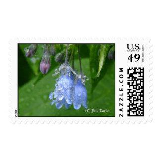 AlaskaBluebell 05 Briefmarken