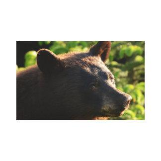 Alaskischer Bär. Herauf nahes und persönliches Leinwanddruck