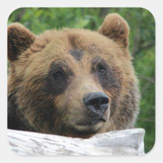Alaskischer Grizzlybär, der Kodiak Quadratischer Aufkleber