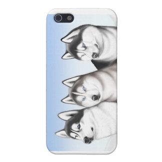 Alaskischer Malamute-Schlittenhund verfolgt iPhone iPhone 5 Cover