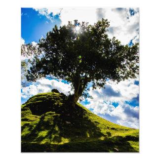 Aller Gewürz-Baum-Druck Foto