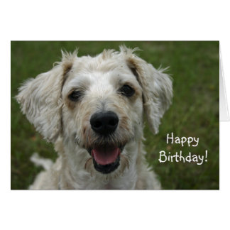 Alles Gute zum Geburtstag vom Hund Karte