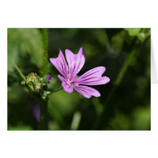 Allgemeine Malven-Blume Grußkarte