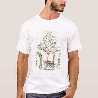 Allgemeiner Spargel in der Blume und in der T-Shirt
