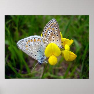 Allgemeines blaues Schmetterlings-Plakat Poster