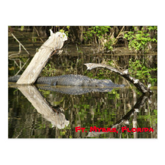Alligator im See Postkarte