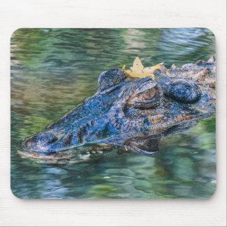 Alligator mit einer Krone Mousepad