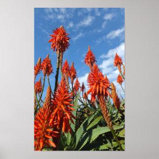 Aloe Arborescens Plakat