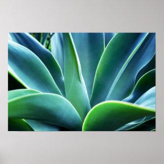 Aloe-Blätter Poster