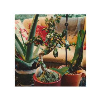 Aloe-Bonsais-Orchideen-Gemisch auf Holz Holzleinwand
