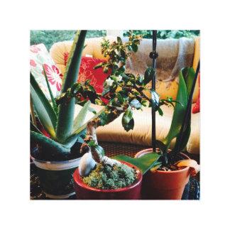 Aloe-Bonsais-Orchideen-Gemisch auf Leinwand