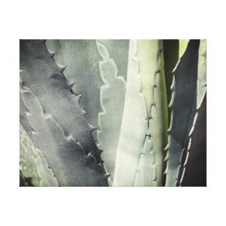 Aloe Leinwanddruck
