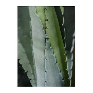 Aloe - MakroKunst-Fotografie Acryldruck