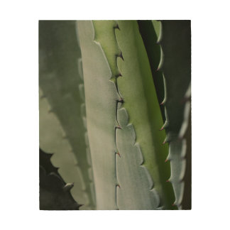 Aloe - MakroKunst-Fotografie Holzwanddeko