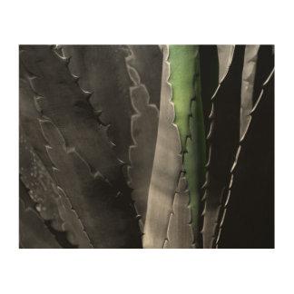 Aloe - MakroKunst-Fotografie in Schwarzem u. im Holzdruck