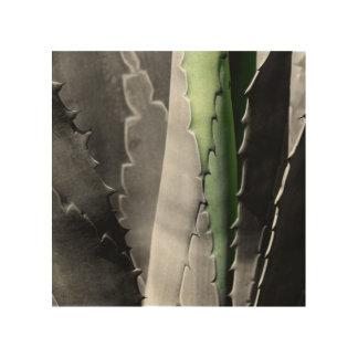 Aloe - MakroKunst-Fotografie in Schwarzem u. im Holzleinwand