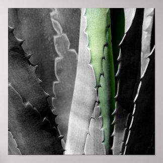 Aloe - MakroKunst-Fotografie in Schwarzem u. im Poster
