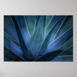 Aloe-Pflanze Poster