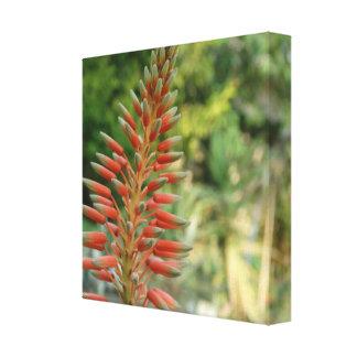 Aloe-Vera-Blumen-Blüten-Foto-Druck Leinwanddruck