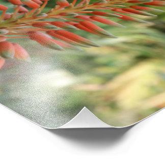 Aloe-Vera-Foto-Kodak-Foto-Papier (Satin) Fotodruck