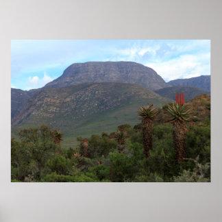 Aloe-Vera-Gebirgslandschaft Poster