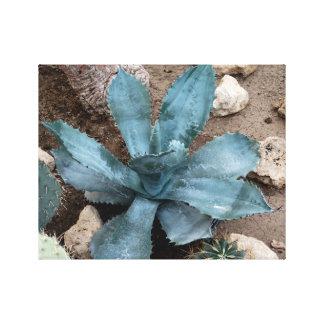 Aloe-Vera-Pflanzen-Foto eingewickelter Leinwanddruck