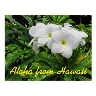 Aloha Hawaii weißer Plumeria-tropische Blume Postkarte