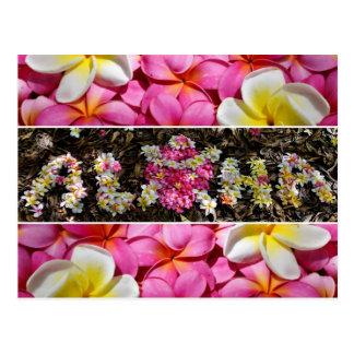Aloha Honu Postkarte