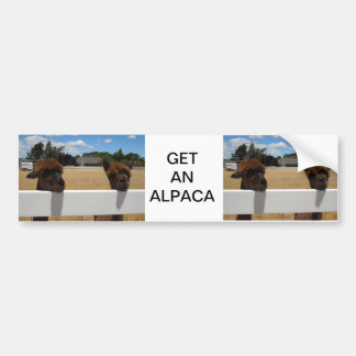 Alpaga dans Templeton, la Californie Autocollants Pour Voiture